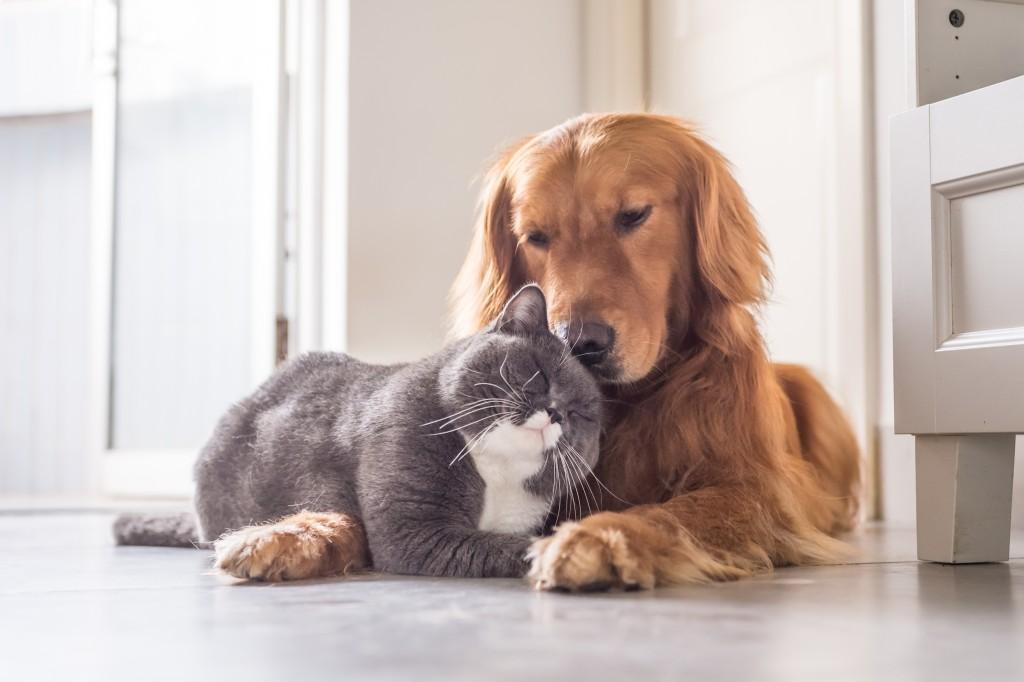 dog and cat cuddling